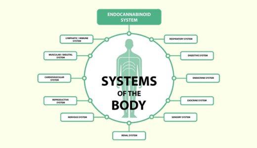 エンド・カンナビノイド・システムを世界一わかりやすく解説